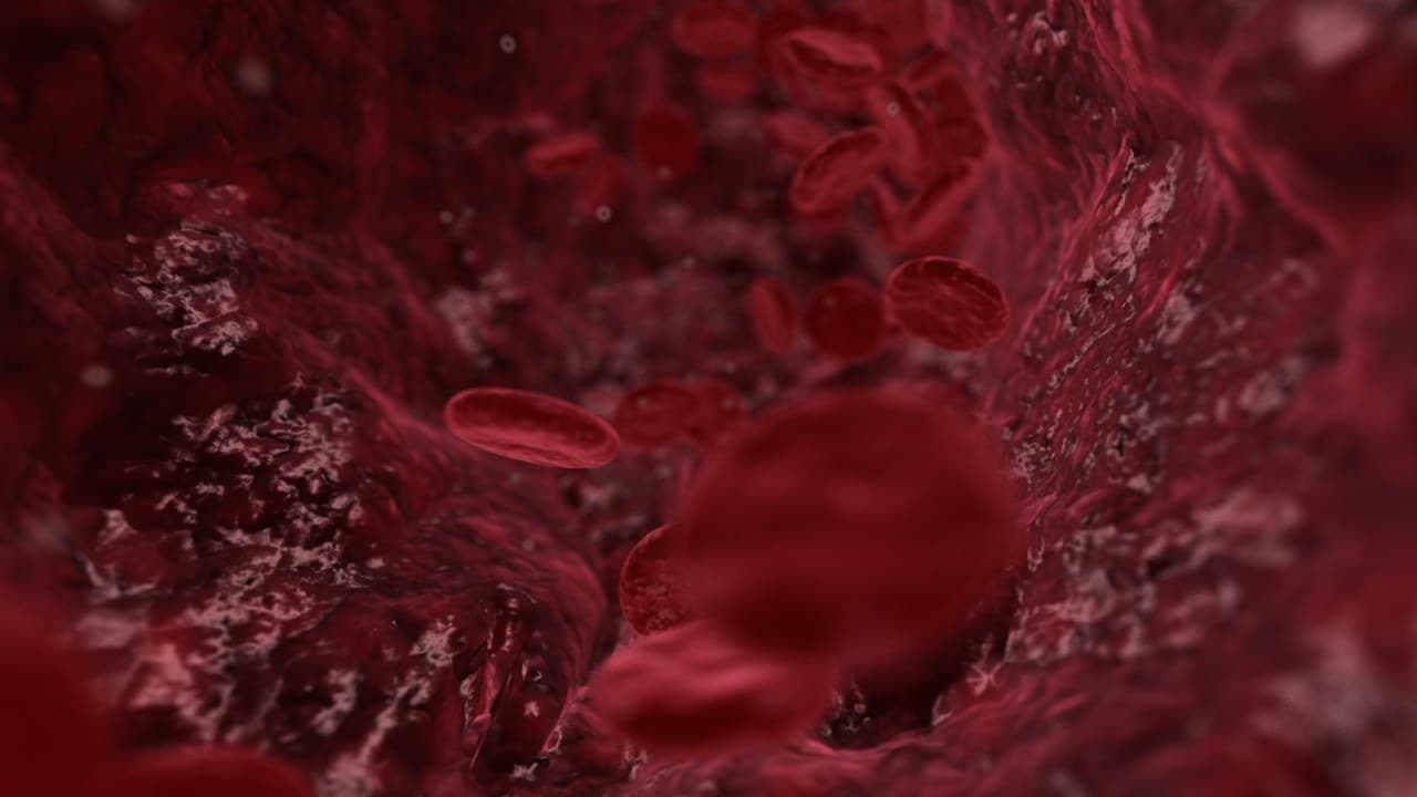 bloodstream 3D